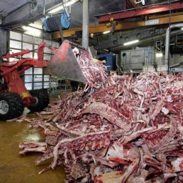 Много мяса